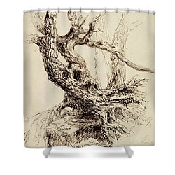 Gnarled Tree Trunk Shower Curtain by Thomas Cole