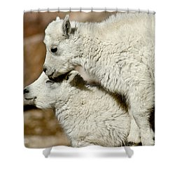 Goat Babies Shower Curtain by Colleen Coccia