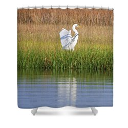 Going Going . . . .  Shower Curtain