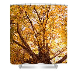 Golden Autumn View Shower Curtain by James BO  Insogna