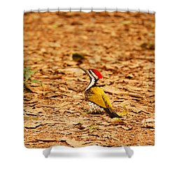 Shower Curtain featuring the photograph Golden Backed Woodpecker by Fotosas Photography