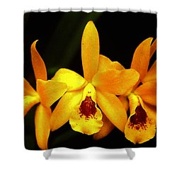 Golden Cattleya Shower Curtain by Rosalie Scanlon