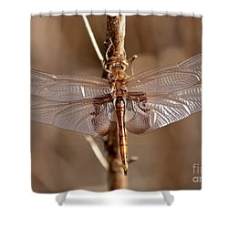 Golden Dragonfly Wings Shower Curtain by Carol Groenen