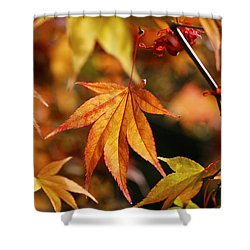 Shower Curtain featuring the photograph Golden Fall. by Clare Bambers