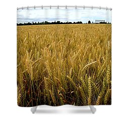 Golden Field Of Barley Shower Curtain