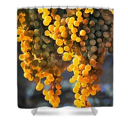 Golden Grapes Shower Curtain by Elaine Plesser