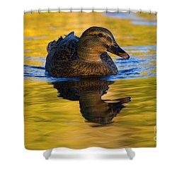 Golden Hen Shower Curtain by Mike  Dawson
