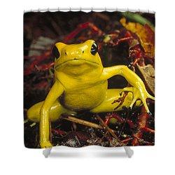Golden Poison Dart Frog Phyllobates Shower Curtain by Mark Moffett
