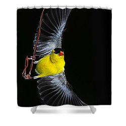 Shower Curtain featuring the photograph Goldfinch High Wire Act by Randall Branham