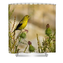 Goldfinch On Lookout Shower Curtain by Bill Pevlor