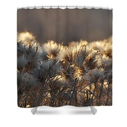 Shower Curtain featuring the photograph Gone To Seed by Fran Riley