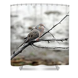 Shower Curtain featuring the photograph Good Morning Dove by Elizabeth Winter