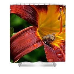 Good Morning Shower Curtain by Lois Bryan