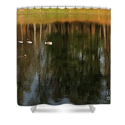 Goose Goose Duck Goose Shower Curtain by Trish Hale