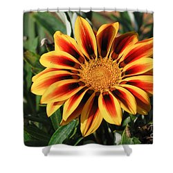 Gorgeous Beauty Shower Curtain by Fotosas Photography