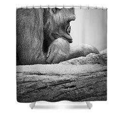 Gorilla Resting Shower Curtain by Darren Greenwood