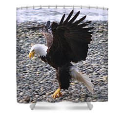 Got It Shower Curtain by Kym Backland