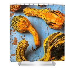 Gourds On Wooden Blue Board Shower Curtain by Garry Gay