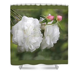 Graceful White Rose And Pink Rosebuds Shower Curtain by Jennie Marie Schell