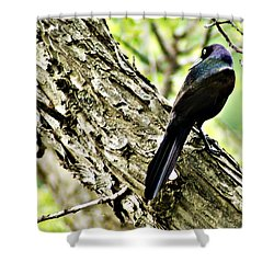Grackle 1 Shower Curtain