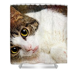 Grammy Said I Could Shower Curtain by Andee Design