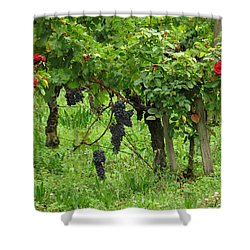 Grape Vines And Roses I Shower Curtain by Greg Matchick