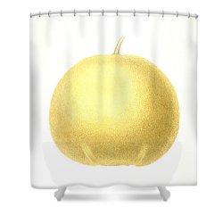 Grapefruit Shower Curtain by Granger