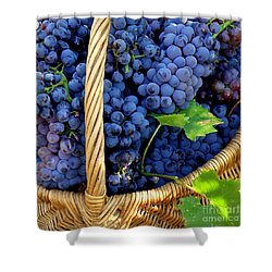 Grapes In A Basket Shower Curtain by Lainie Wrightson