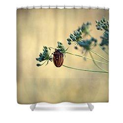 Graphosoma Lineatum Shower Curtain by Stelios Kleanthous
