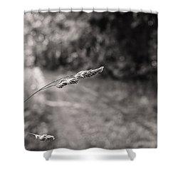 Grass Over Dirt Road Shower Curtain