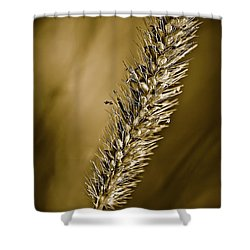 Grass Seedhead Shower Curtain