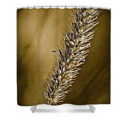 Grass Seedhead Shower Curtain by  Onyonet  Photo Studios