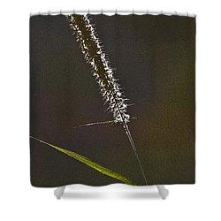 Grass Spikelet Shower Curtain by Heiko Koehrer-Wagner