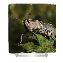 Grasshopper 2 Shower Curtain by Ernie Echols