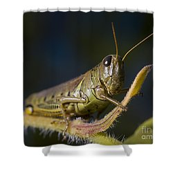 Shower Curtain featuring the photograph Grasshopper by Art Whitton