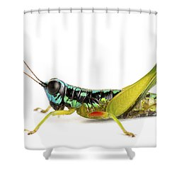 Grasshopper Barbilla Np Costa Rica Shower Curtain by Piotr Naskrecki