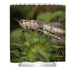 Grasshopper Shower Curtain by Ernie Echols
