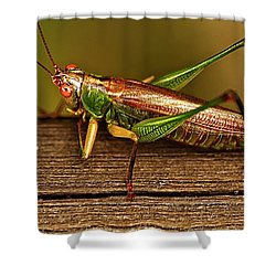 Grasshopper Shower Curtain by Linda Tiepelman