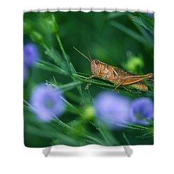 Grasshopper Shower Curtain by Mike Grandmailson