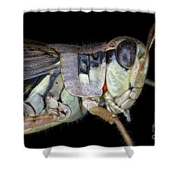 Grasshopper With Parasitic Mite Shower Curtain by Ted Kinsman