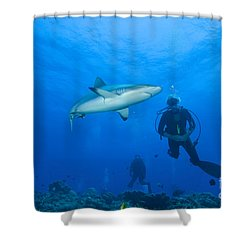 Gray Reef Shark With Divers, Papua New Shower Curtain by Steve Jones