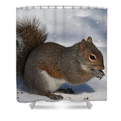 Gray Squirrel On Snow Shower Curtain