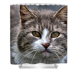 Shower Curtain featuring the photograph Gray Tabby Tux Cat by Chriss Pagani