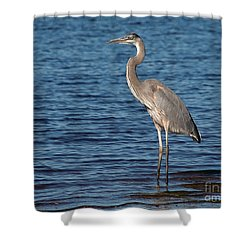 Shower Curtain featuring the photograph Great Blue Heron by Art Whitton