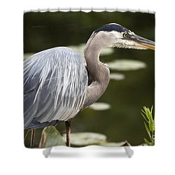 Shower Curtain featuring the photograph Great Blue Heron  by Jeannette Hunt