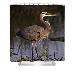 Great Blue Heron Shower Curtain by Natural Selection Ralph Curtin