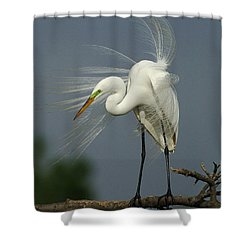 Great Egret Shower Curtain by Bob Christopher
