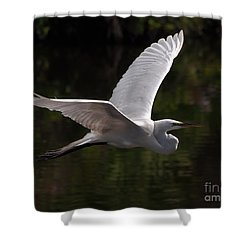 Shower Curtain featuring the photograph Great Egret Flying by Art Whitton