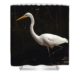 Shower Curtain featuring the photograph Great Egret Hunting by Art Whitton