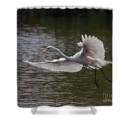 Shower Curtain featuring the photograph Great Egret In Flight by Art Whitton